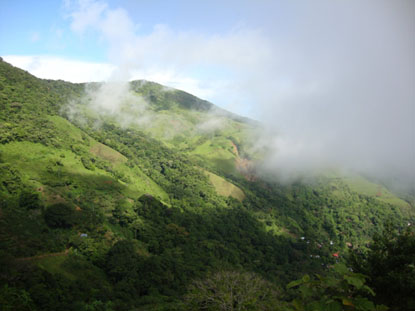 coffee-covered mountains in a lush green valley