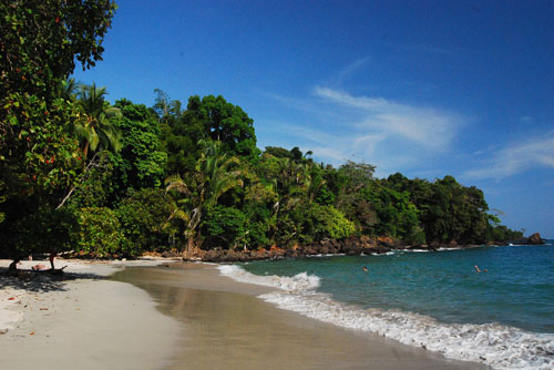 a beautiful sea beach besides tropical forest