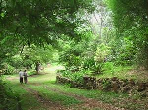 beautiful green garden at white cloud sanctuary