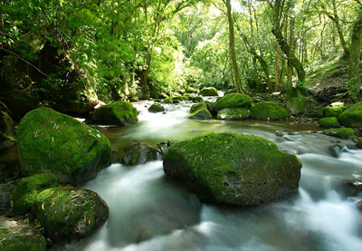 beautiful small river in The Braulio Carrillo National Park