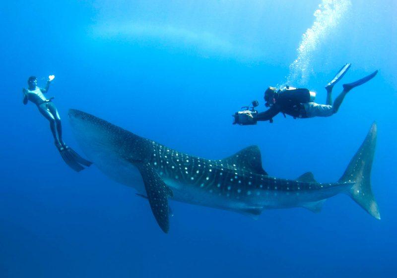 Cocos-Island-Whale-Shark